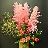 Rowentauk 100pcs/Package Cortaderia Selloana Samen Zum Pflanzen, Dekor für Ihren Garten Innenhof Balkon