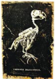 Bird Halloween Canvas Art (No Frame)