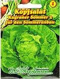 Kopfsalat ' Kagraner Sommer 2 ' für den Sommeranbau