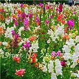200 PC calientes enano Semillas Antirrhinum Snap fragante en maceta de flores Semillas de multi color opcional Así hogar hermoso jardín de plantas 3