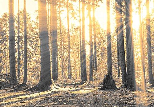 Neuheit! Modernes Acrylglasbild 135x45 cm - 1 Teile - 2 Formate zur Auswahl – Glasbilder – TOP - Wand Bild - Kunstdruck - Wandbild – Bilder - Wald Baum Natur Landschaft c-B-0077-k-c 135x45 cm - 8