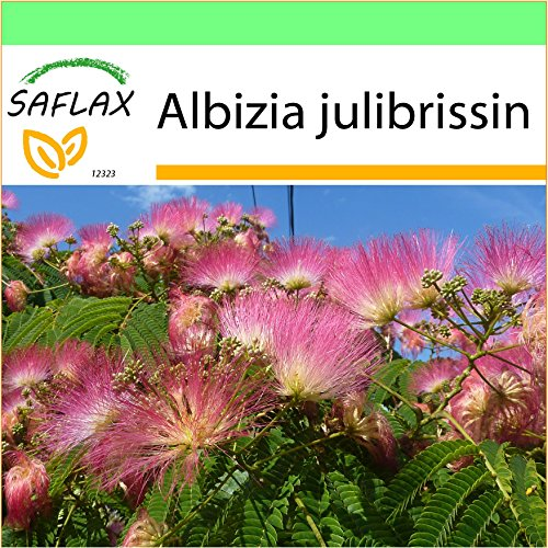 SAFLAX - Jardin dans la boîte - Albizia - 50 graines - Albizia julibrissin