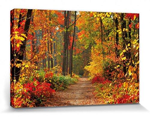 1art1® Bosques - Mágicos Colores De Otoño Cuadro