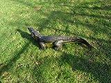 2 Krokodil Figuren in verschieden größen (wahlweise 69cm oder 117cm) Deko Garten Gartenfigur Alligatoren Kaiman (Mehrfarbig) Reptil Gartendeko für Teich für Innen und außen Schlange Tiere Gartenzwerg (Krokodil 117cm variante 2)