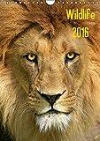 Wildlife 2016 (Wandkalender 2016 DIN A4 hoch): Wildlife-Fotografie (Monatskalender, 14 Seiten ) (CALVENDO Tiere)