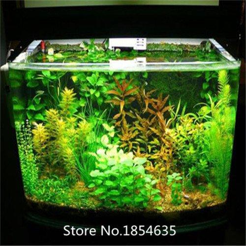 Generic 500 Pcs / Bag Aquarium Fish Tank Coral Plant Underwater Ornament Water Grasses Random Aquatic Plant Grass Seeds