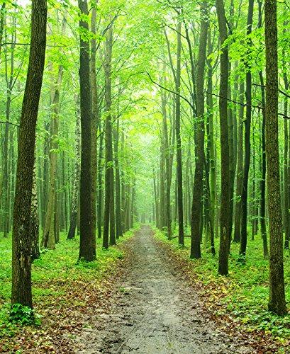 Bilderdepot24 Fototapete selbstklebend Waldweg - 65x80 cm
