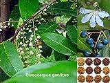 #5: Rudraksha Seeds - 10 Seeds by Creative Farmer