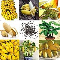 Qbisolo 100 PC Raras Semillas de Plátano Enanas Mini Bonsai Fruta Exótica Home Garden Plants
