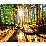 murando - Fototapete Wald 350x256 cm - Vlies Tapete - Moderne Wanddeko - Design Tapete - Wandtapete - Wand Dekoration - Waldlandschaft Sonne grün Natur Wasser c-B-0267-a-a