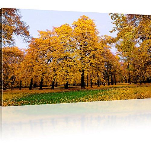 Park im Herbst Leinwanddruck Natur Wandbild Landschaft Kunstdruck