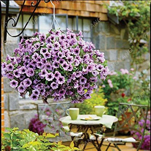 200 pcs / sac Petunia Graines Bonsaï Graines de fleurs Court Taille Jardin Fleurs Graines d'intérieur ou extérieur Plante en pot Livraison gratuite Jaune clair