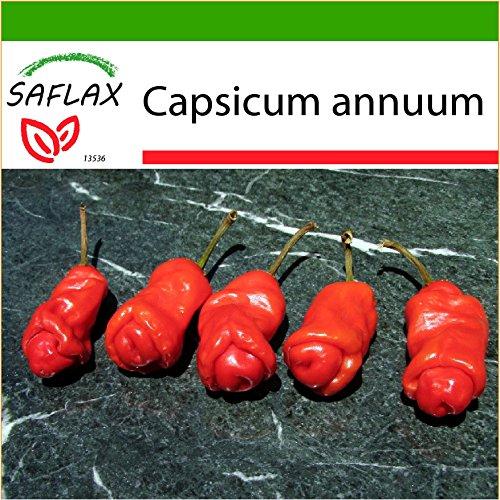 SAFLAX - Chili - Peter Peppers Penis Chili - 10 Samen - Mit Substrat - Capsicum annuum