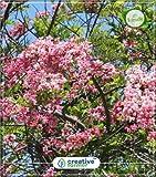 GEOPONICS SEME semi giavanese ia orto 5Indoor, Outdoor Kitchen Garden seme semi (5 per pacchetto)