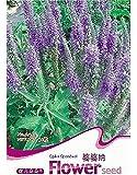 FD1878 Spike Veronica seme di fiore Veronica a spighe Hot ~ 1 Confezione 50 Semi ~ Rare