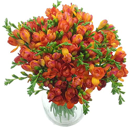 clare-florist-meadows-freesia-bouquet-fresh-freesia-flowers-red-40-piece