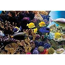 Pyramid International - Póster de peces tropicales y coral (plástico/cristal, 61 x 91,5 x 1,3 cm), multicolor