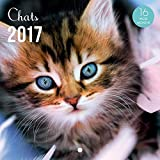 YVON Calendrier 2017 Chats 16 mois 14,5 x 14,5 cm...