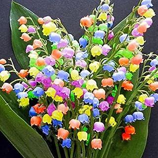 AIMADO Samen-Rarität 10 Pcs Maiglöckchen Bunt Blumensamen mehrjährig Winterhart Duftend Saatgut bienenfreundlich Blumen,ideal für Garten Balkon