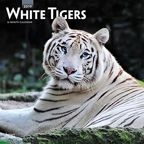White Tigers - Weiße Tiger 2019 - 18-Monatskalender: Original BrownTrout-Kalender [Mehrsprachig] [Kalender]