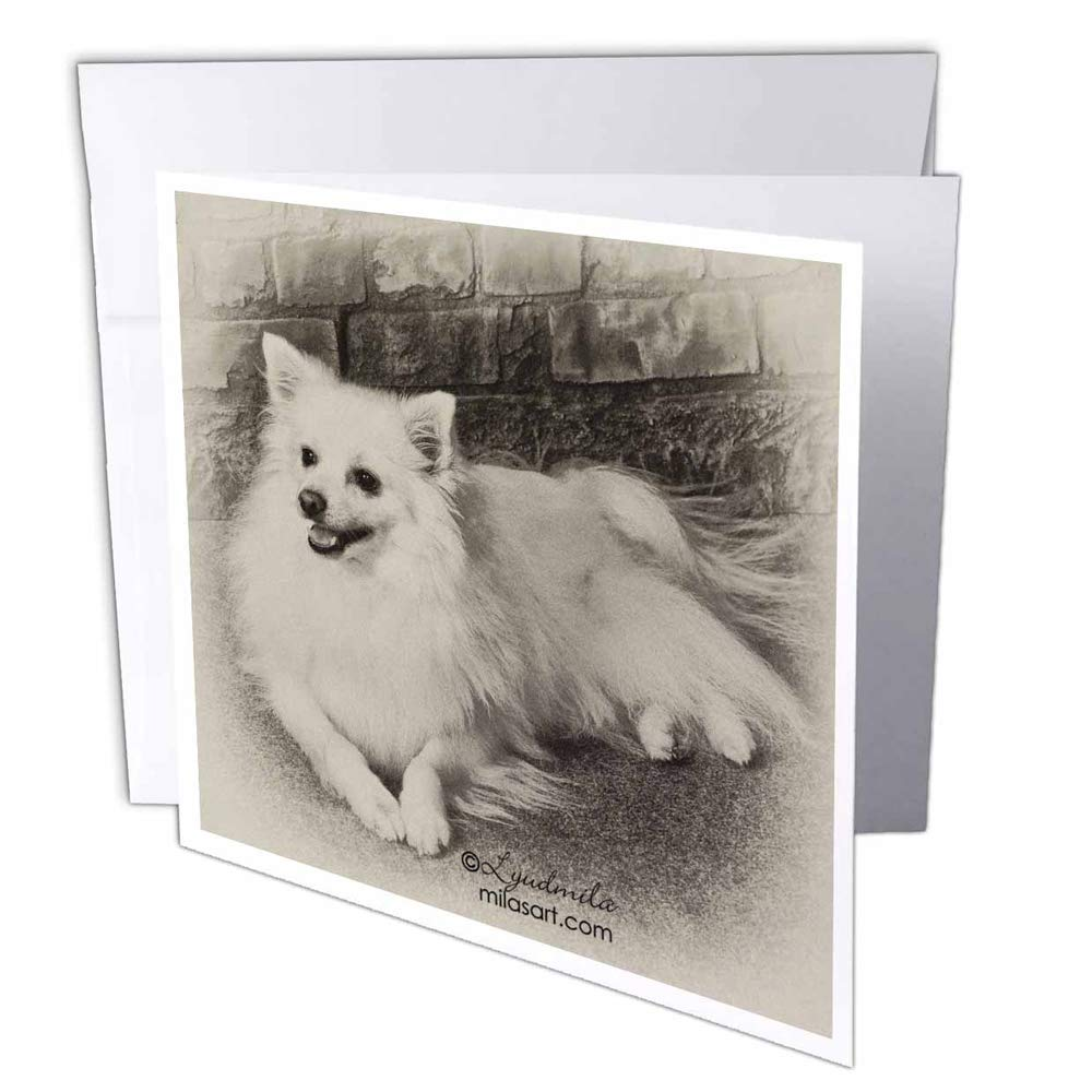"3dRose gc_4631_2 6 x 6-Inch""American Eskimo Dog"" Greeting Card (Pack of 12)"