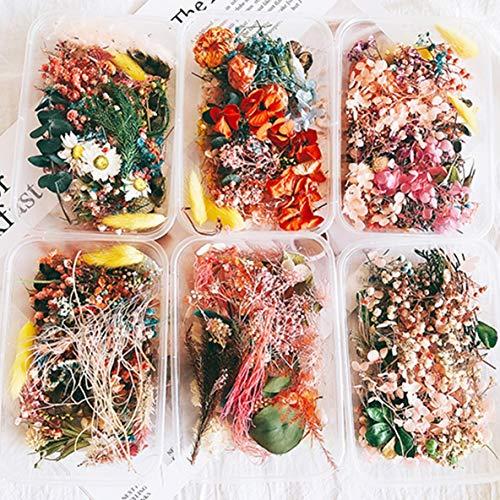 Moliies Plantas secas de Flores secas Reales para aromaterapia Vela Resina epoxi Colgante Collar Joyería Fabricación Artesanía Accesorios de Bricolaje 丨 Aleatorio