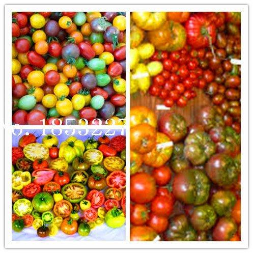 50pc NON-OGM Seeds graines de tomates végétales nouvelle arrivée Graines Bonsai bio pour le jardin