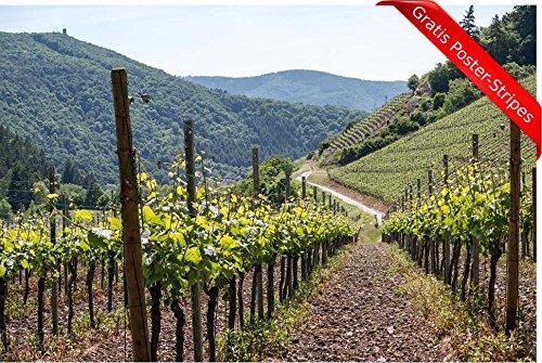 Zopix Premium Poster (XXL) Reben Wein Weinanbau Weinrebe Rot Wandbild - 91x61 cm (versch. Größen) - Leinwand Alternative - Inklusive Poster-Stripes