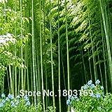 Bambu gigante domande e risposte giardino for Semi bambu gigante