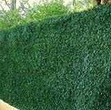 Haie végétale artificielle Lux 243 brins H 1m50 Haiejet7LUX12
