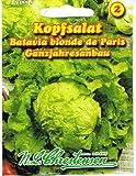 Kopfsalat ' Batavia blonde de Paris' ganzrahresanbau