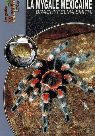 La mygale mexicaine : Brachypelma Smithi