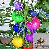 100pcs seltene Regenbogen-Tomatensamen Ziertopf Bio-Gemüse, Obst, Samen seltene schöne Hausgarten Bonsai