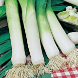 Leek Plants (Musselburgh) 30 Garden Ready Plants (approx). Grow your own.