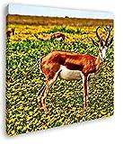 deyoli Antilope auf wundervoller Blumenwiese im Format: 60x60 Effekt: Zeichnung als Leinwandbild, Motiv auf Echtholzrahmen, Hochwertiger Digitaldruck mit Rahmen, Kein Poster oder Plakat
