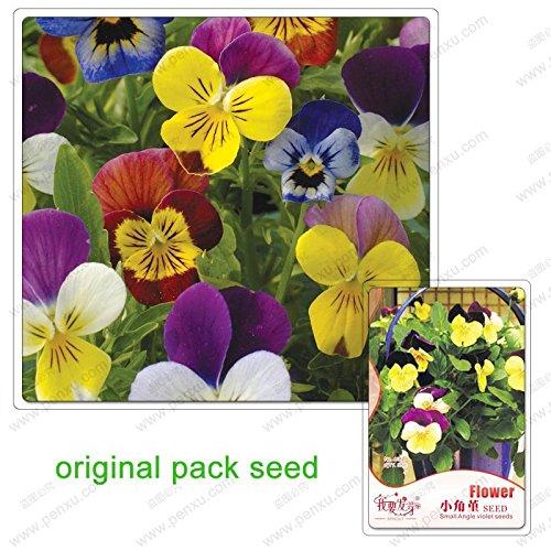 35 graines / Pack, fleurs Pansy, graines alto cornutat, graines de fleurs balcon jardin bonsaïs petit angle Viola en pot