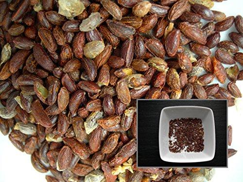 Bourreau Des Arbres - 20 graines - Celastrus Orbiculatus - Oriental Bittersweet