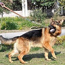 PerroGrandeFormaciónKitAceroInoxidablePCadenaCueroCorreaDel Animal DomésticoCollarParaPerrosCorreaPerro