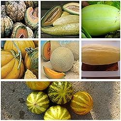 Beliebte Melonensamen,popular melons:8 Sorten, 80 Samen, getrennt verpackt von unserer ungarischen Farm im Prozess der Biozertifizierung, ECHT NUR von mediterranesamenUngarn