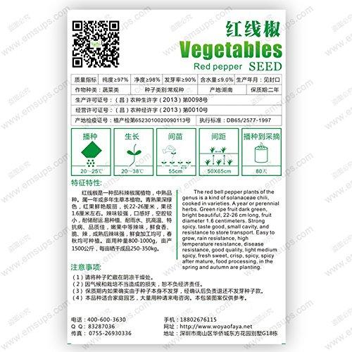 Emballage d'origine Graines de poivron rouge bio long Capsicum Biji Chili Spicy Graines, Bonsai Semences Potagères - 35 PCS