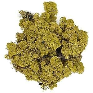 Naturosphère - Décoration naturelle - Lichen des rennes stabilisé vert olive - 50 grammes