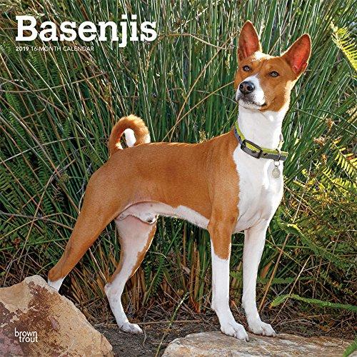 Basenjis 2019 Calendar