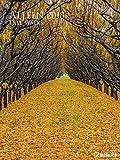2018 Tree Walks Poster Calendar- teNeues Photography Calendar - 48 x 64 cm