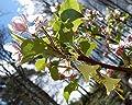 Boucles d'oreilles fleurs jaunes avec petits cristaux Swarovski/bijoux jonquille féerique/forêt/fleur jaune/citron/romantique printemps/Reine des fées/elfe/mignon/mori girl/kawaii