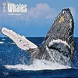 Whales - Wale 2018-18-Monatskalender: Original BrownTrout-Kalender [Mehrsprachig] [Kalender] (Wall-Kalender)