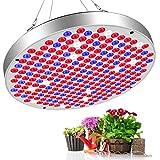 Vivibel 50W LED Pflanzenlampe 250LEDs Vollspektrum Pflanzenlicht Pflanzenleuchte Wachsen Lampe