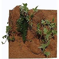 Reptiles Planet - Fondo de plantación Natural para terrario (20 x 30 x 1 cm)