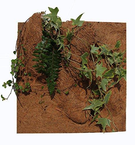 Reptiles Planet Natur Pflanzen Hintergrund für Terrarium, 20x 30x 1cm