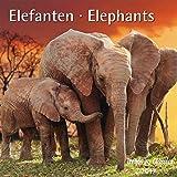 Elefanten Elephants 2017 - Broschürenkalender - Wandkalender - mit herausnehmbarem Poster - Format 30 x 30 cm