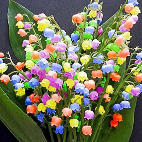 Ultrey Samenshop - 40 Stück duftend bunte Maiglöckchen Samen Lily Of The Valley seltene Blumensamen mehrjährig winterhart für Garten Balkon/Terrasse